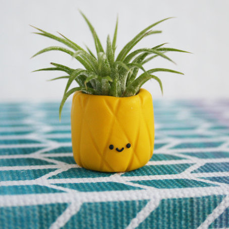 Air plant pineapple  cute fruit airplant holder1